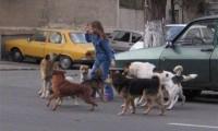 Bucureşti: Referendum pe tema eutanasierii câinilor fără stăpân