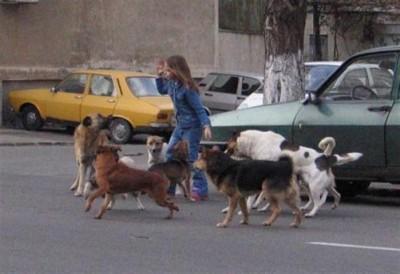 Parlament: Câinii fără stăpân vor fi eutanasiaţi. Referendumul lui Oprescu a fost anulat