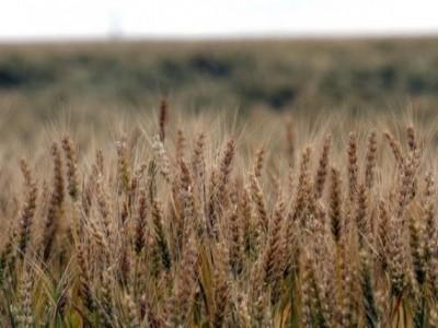 Cea mai bogată recoltă din ultimii 8 ani. Profit, doar pentru intermediari