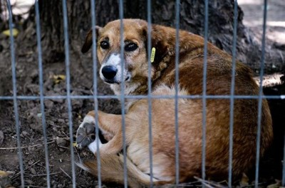 România, pro şi contra eutanasiere
