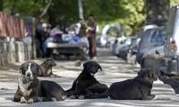 Autorităţile, impasibile: copil sfâşiat de câini în plină zi în Capitală