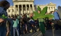 Decizie unică în lume: Producția și comercializarea marijuanei, legale în Uruguay