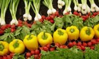 Agricultura, magnet pentru românii din străinătate