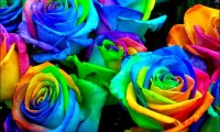 Puterea culorilor. Invata cum sa stapanesti culorile pentru a reusi in viata