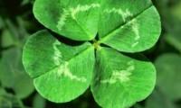 Cum sa castigi la loto: cele mai norocoase numere din lume