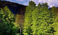 Un bărbat a locuit în pădure 10 ani pentru a scăpa de soția sa