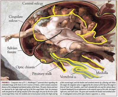 creierul-1