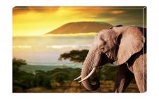 Mihai Voropchievici: Dacă visezi un elefant, se apropie posibilitatea de a se realiza o căsătorie amânată de ceva timp