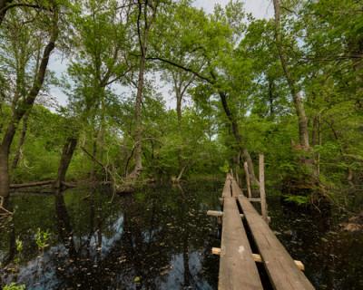 """The Independent: Crimele și corupția amenință pădurile din România, """"Amazonul Europei"""""""