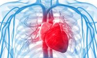 Grupele de sange si riscul lor cardiovascular - studiu