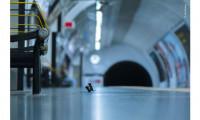 Doi șoareci luptându-se la metroul din Londra, aleasă de public cea mai bună fotografie cu animale a anului