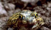 O broască exotică a călătorit 8.000 km și a apărut într-un supermarket din Marea Britanie