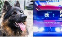 Un câine a murit în Germania salvându-și stăpânul dintr-un incendiu