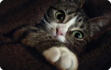 SUA: Milioane de dolari pentru experimente pe pisici