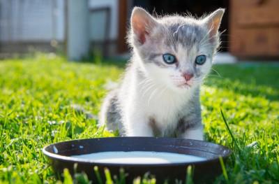 Aplicația care traduce mieunatul pisicilor. Cum funcționează și câte expresii cunoaște