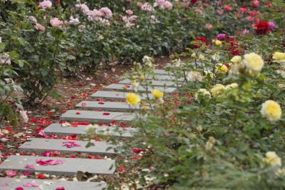 5 idei de amenajari exterioare pentru curte sau gradina