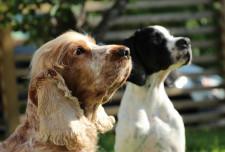 Ce înseamnă, de fapt, pedigree?