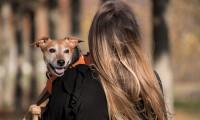 Cum ne pot ajuta animalele de companie să ne îmbunătățim sănătatea mintală?